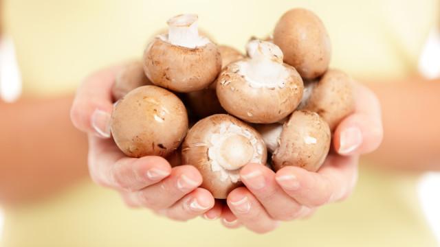 Comer 300 gramas de cogumelos trava esta doença degenerativa da mente