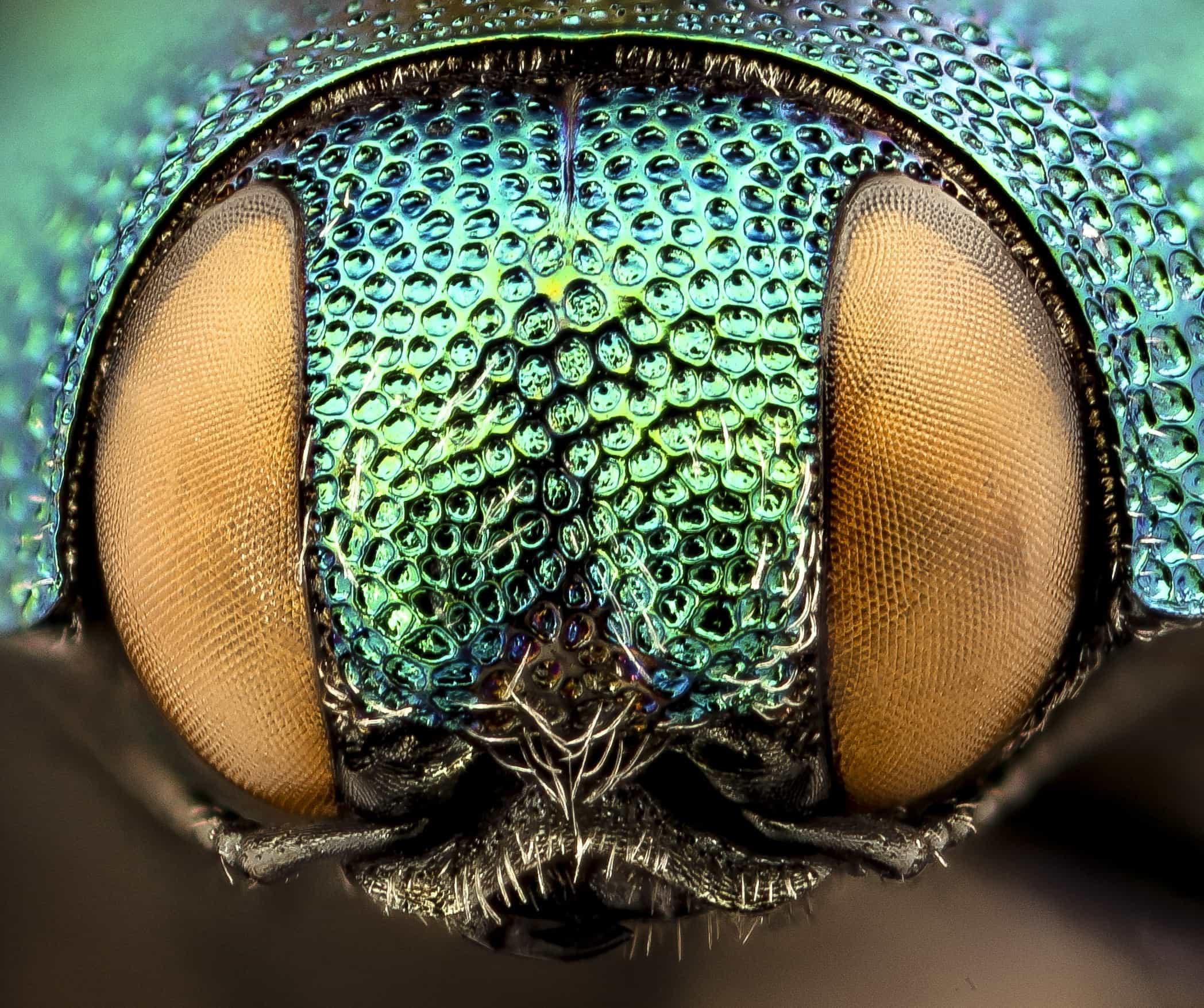 Natureza em plenos: A extraordinária beleza dos insetos