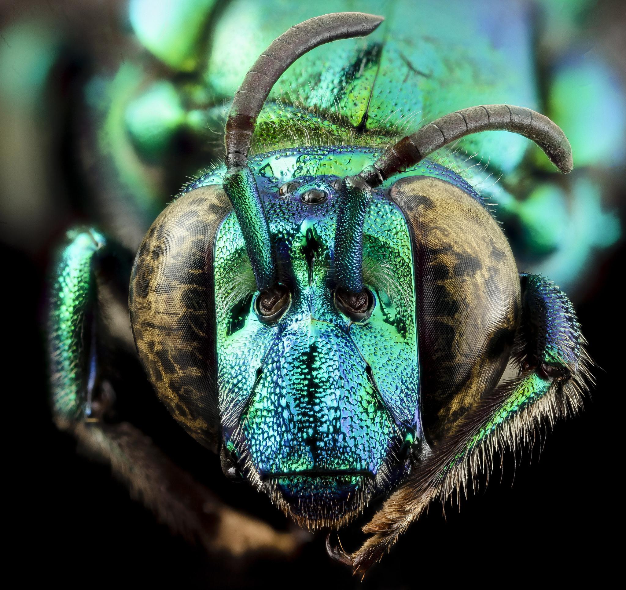 Natureza em pleno: A extraordinária beleza dos insetos
