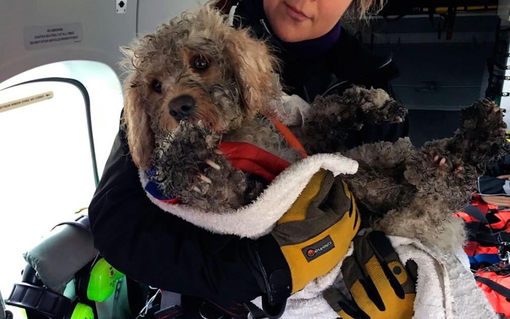 Cão perdido na neve resgatado de helicóptero pela Guarda Costeira