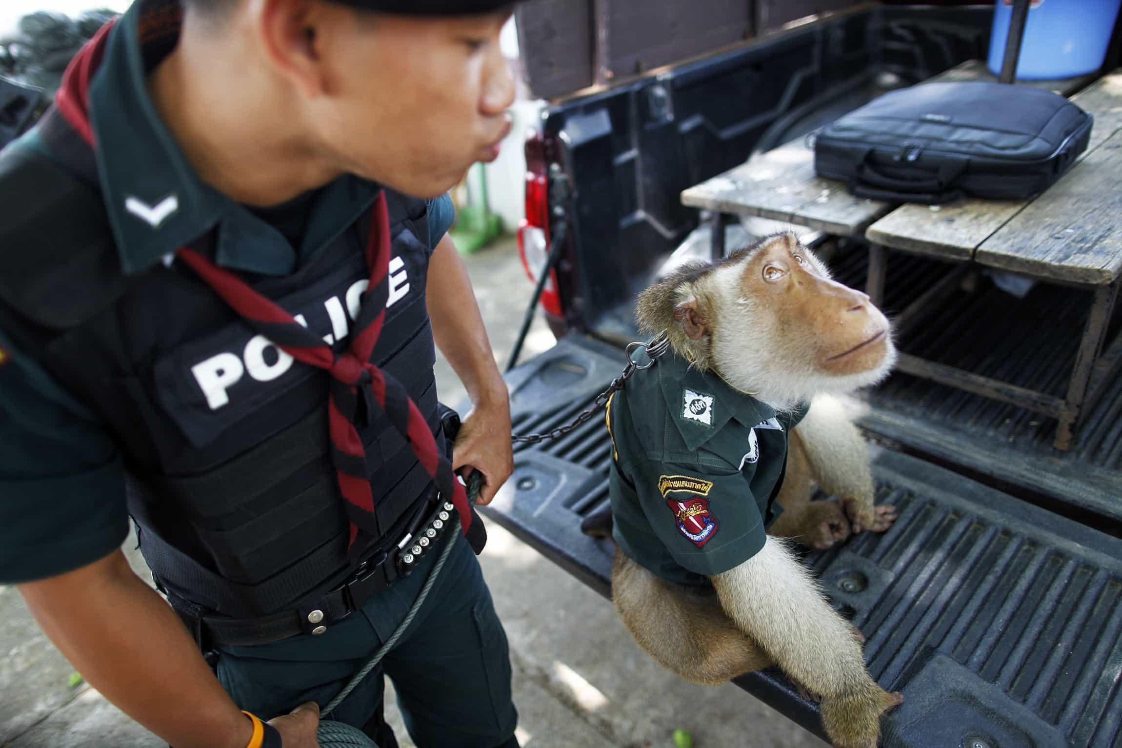 Os fascinantes empregos dos animais