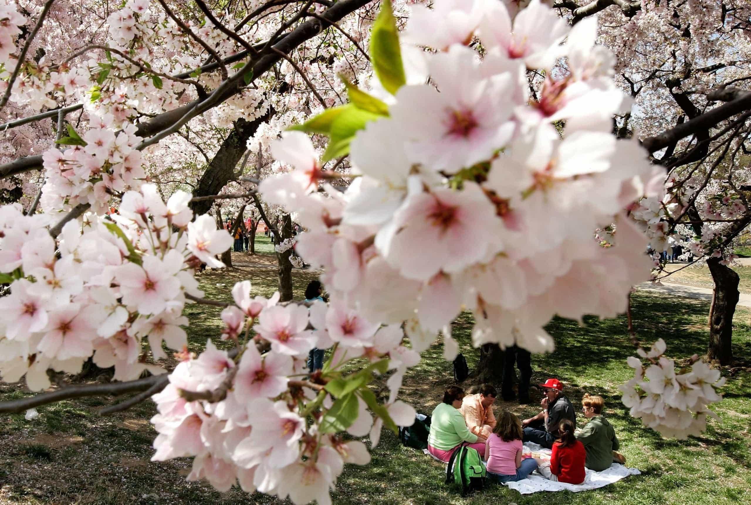 Já chegou! A beleza da primavera pelo mundo
