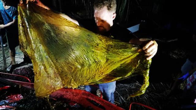 Baleia encontrada morta nas Filipinas com 40 kg de plástico no estômago