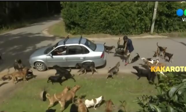 Jornalista atacado por cães durante reportagem em centro de animais
