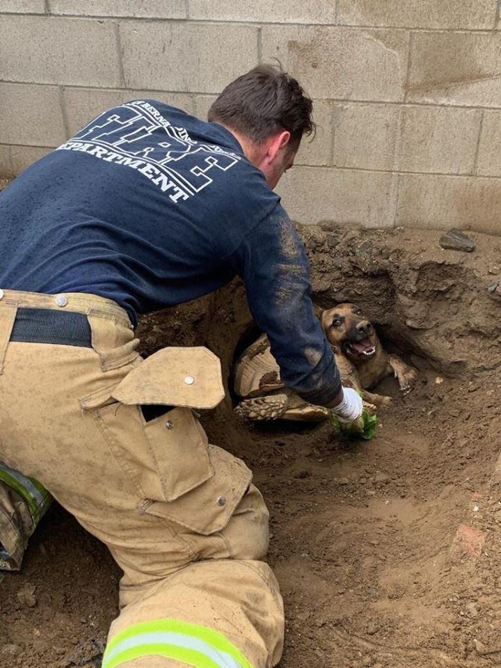 Bombeiros salvaram cão que ficou entalado em túnel com tartaruga de 30kg