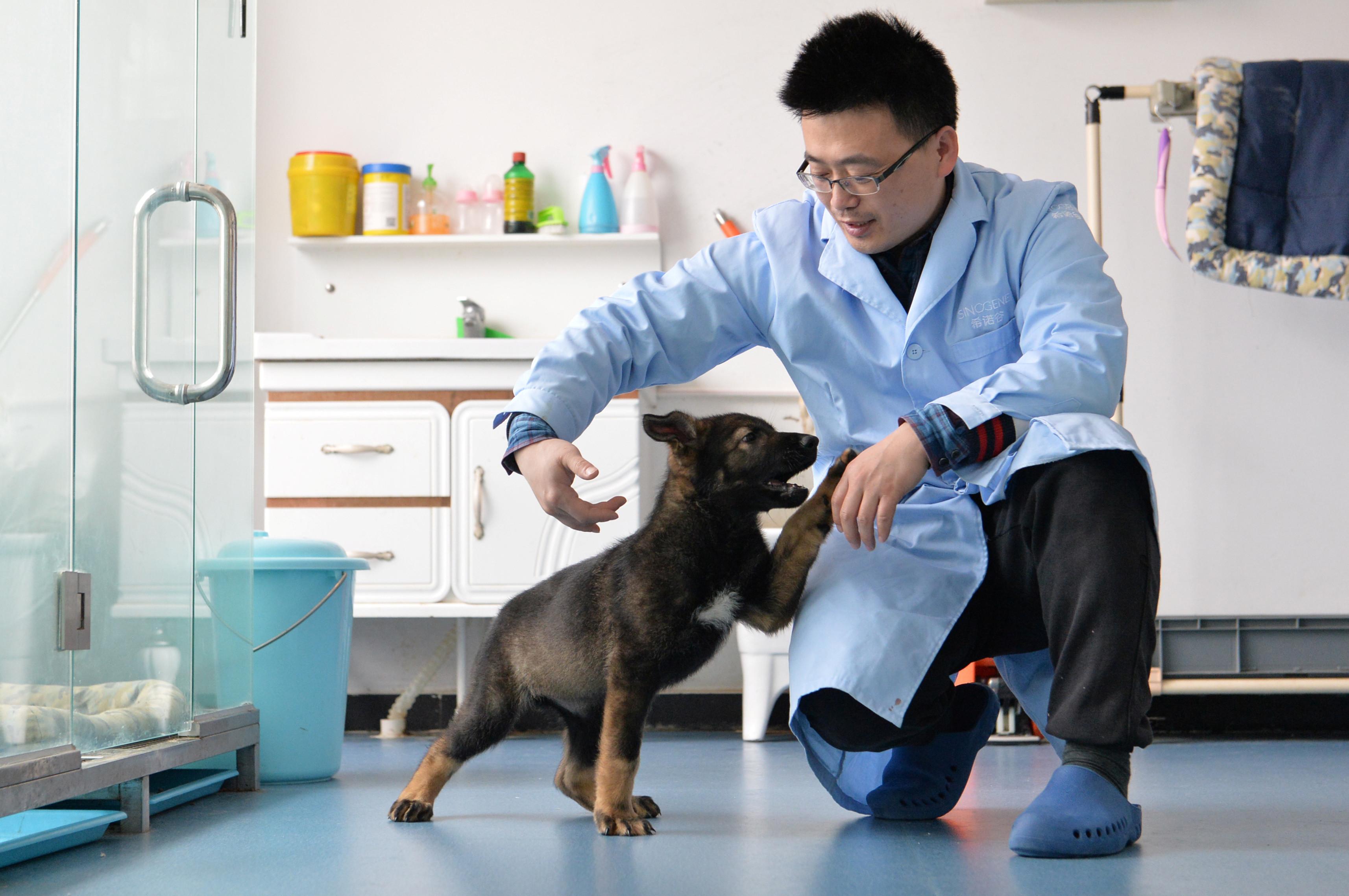 """China anuncia que clonou o """"Sherlock Holmes dos cães da polícia"""""""