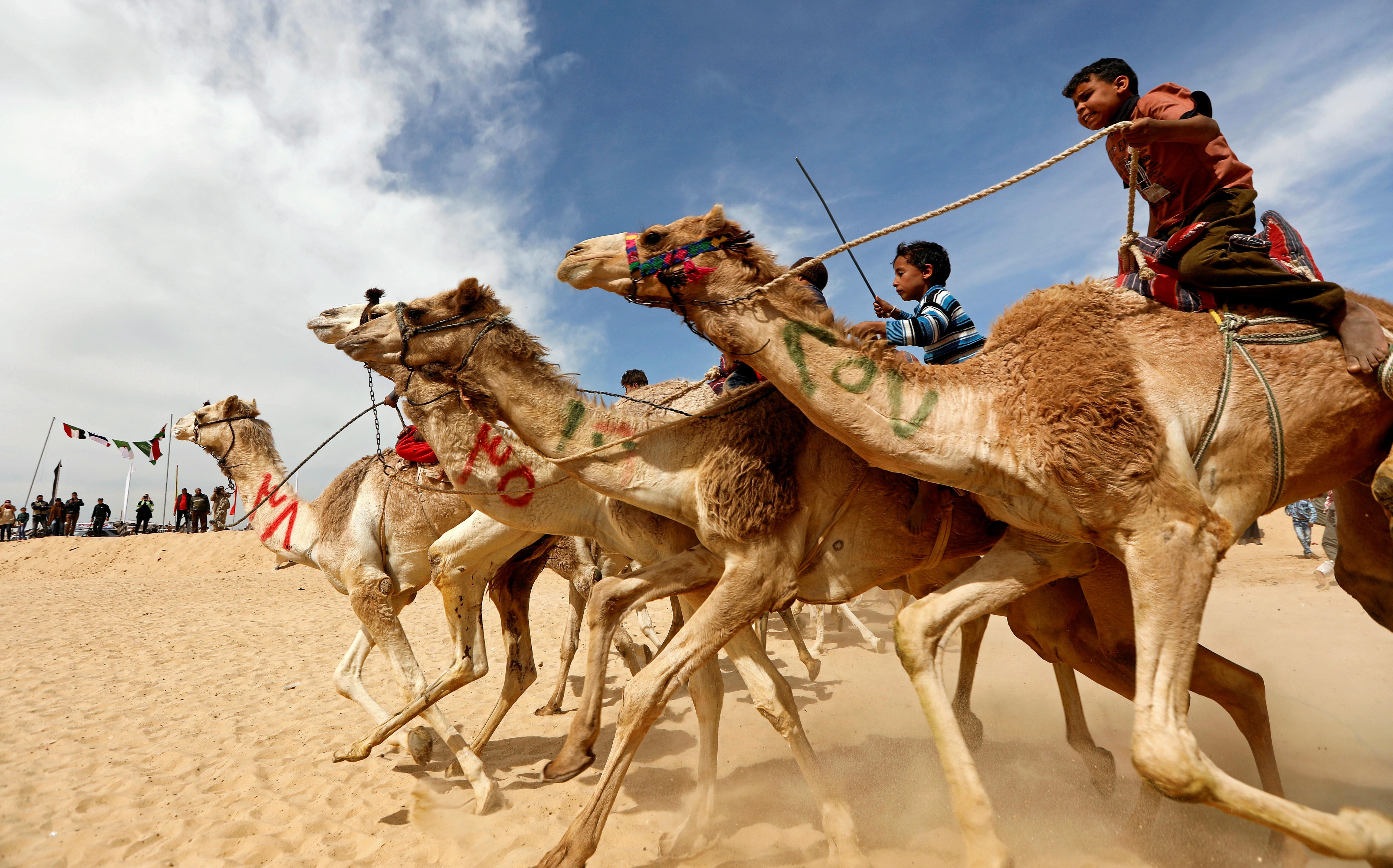 Crianças competem em corrida de camelos no deserto do Egito