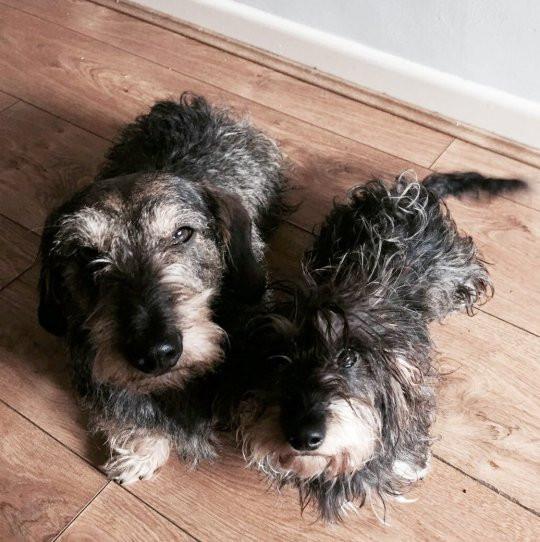 Cão encontrado pela irmã cinco dias depois de ter caído em toca de coelho