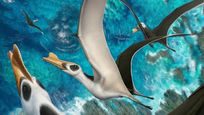 Descoberta nova espécie de réptil voador com 125 milhões de anos