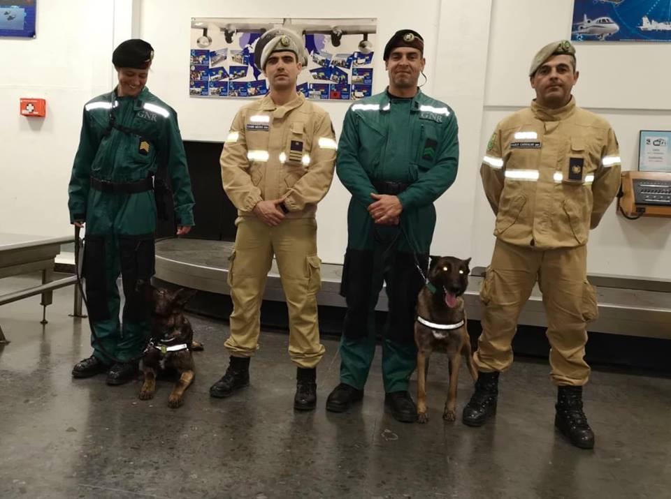 Síria e Kejsi, as cadelas que partiram em missão para Moçambique
