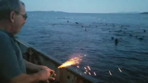 Choque no Canadá com pescador que atirou explosivo contra leões marinhos