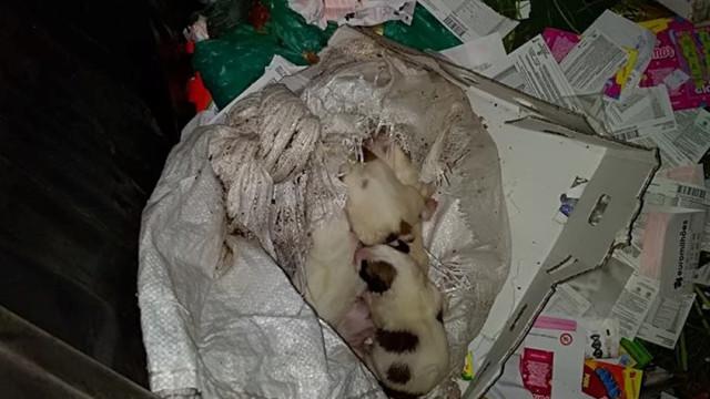 Ninhada de cães resgatados. Estavam dentro de saco em caixote do lixo