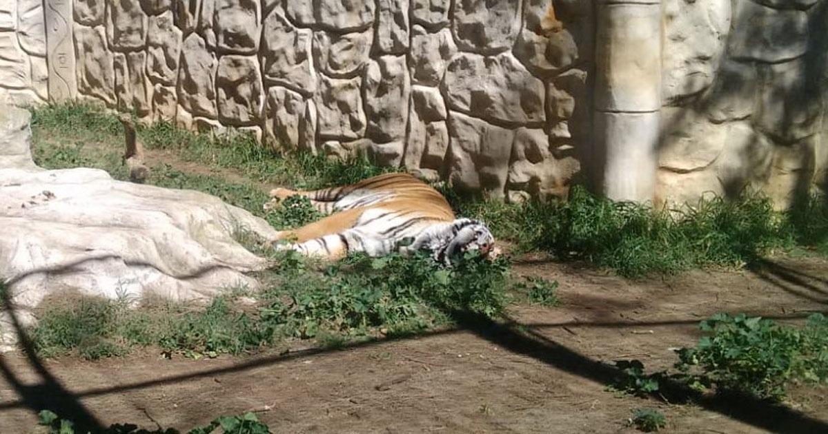 Zoo espanhol encerrado há dois meses e animais ficaram à sua sorte