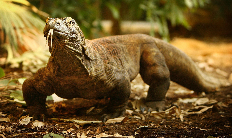 A ilha de Komodo vai ficar fechada ao turismo durante um ano