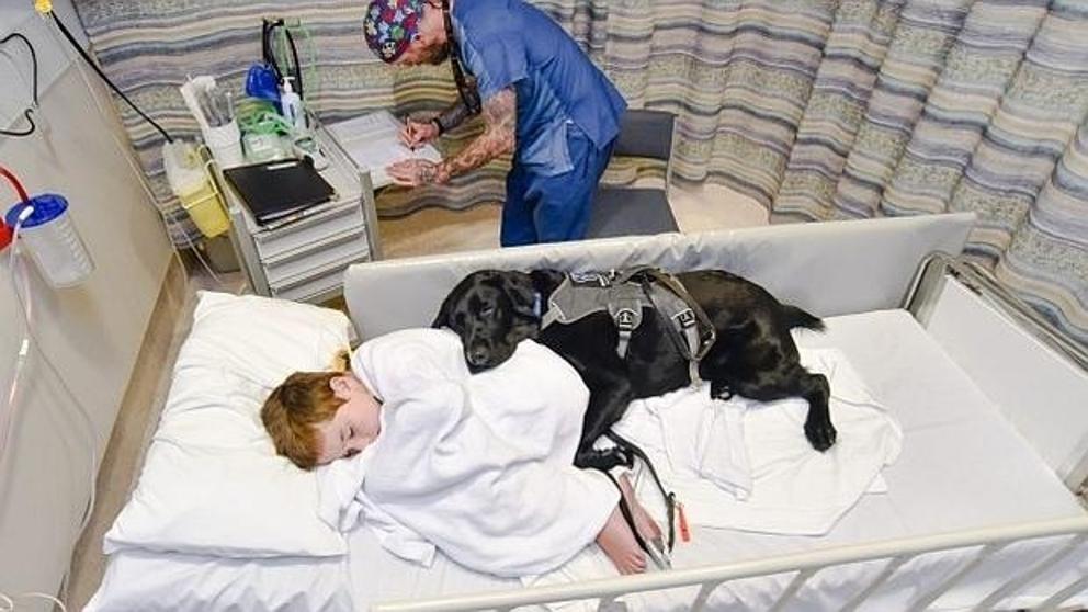 Menino autista e cão são inseparáveis... mesmo no hospital