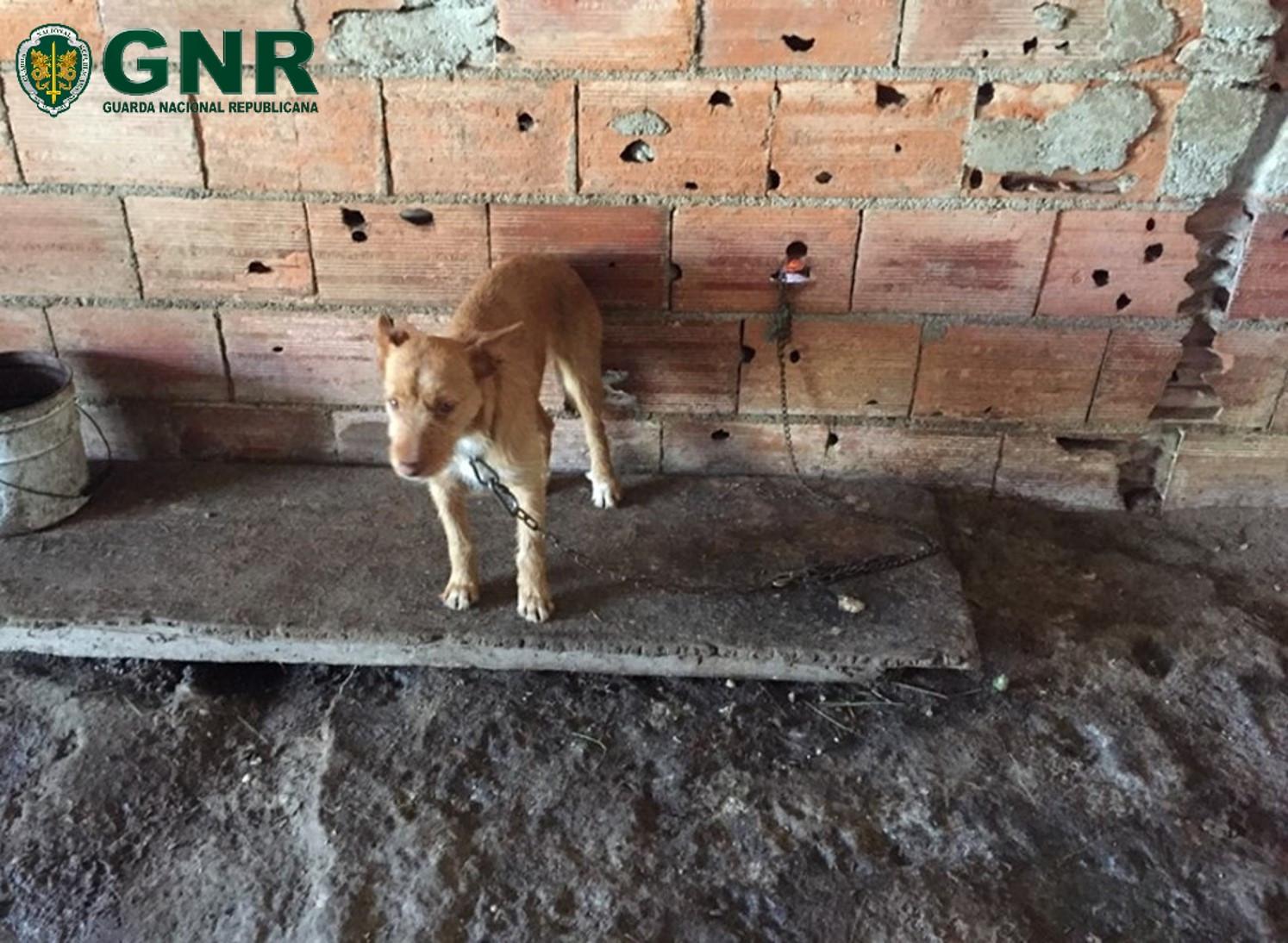 Mantinha cães sem condições. Foi identificado por maus tratos a animais