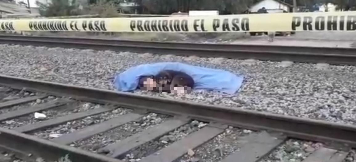 Cão deita-se ao lado do cadáver do dono que morreu trucidado por comboio