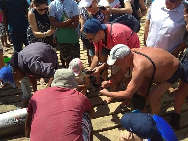 Turistas pagam por fotos com tubarões mortos e esquartejados