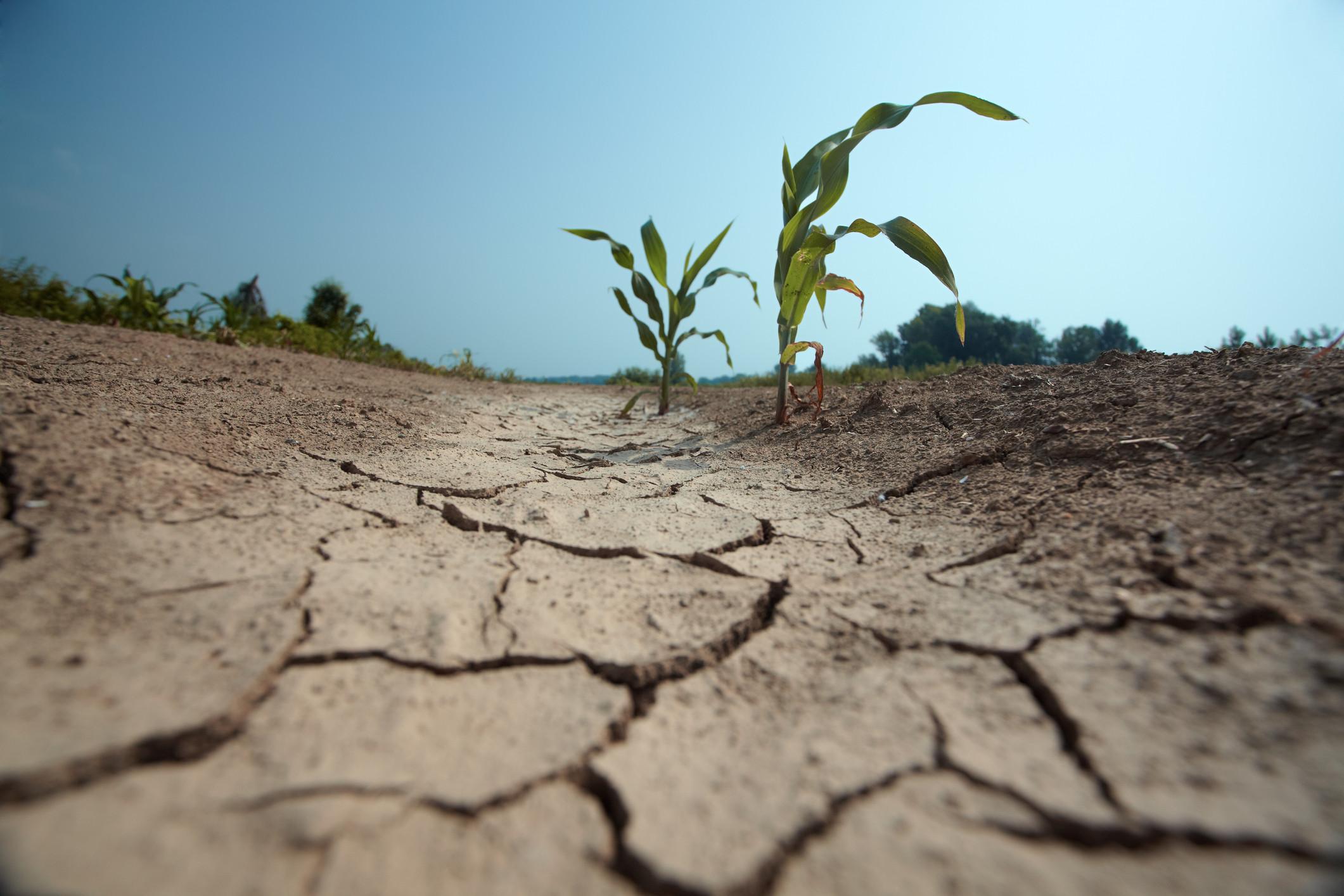 Seca põe em risco produção de certas espécies e aumenta importações