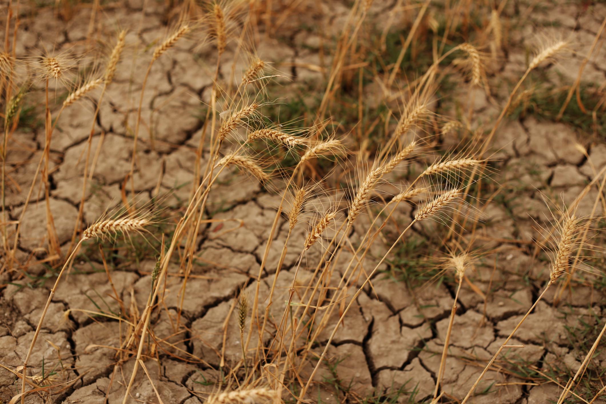 """Maior desafio da agricultura vai ser """"produzir mais com menos"""""""