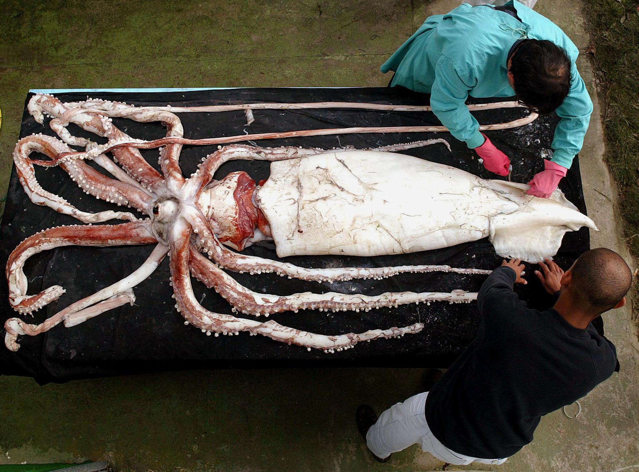 Gigantes: Os maiores animais do planeta