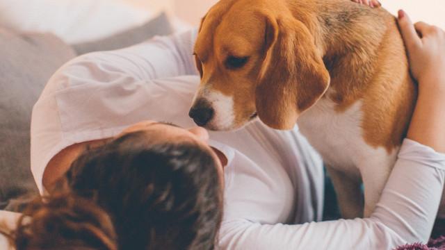 Cães capazes de detetar cancro com 97% de precisão