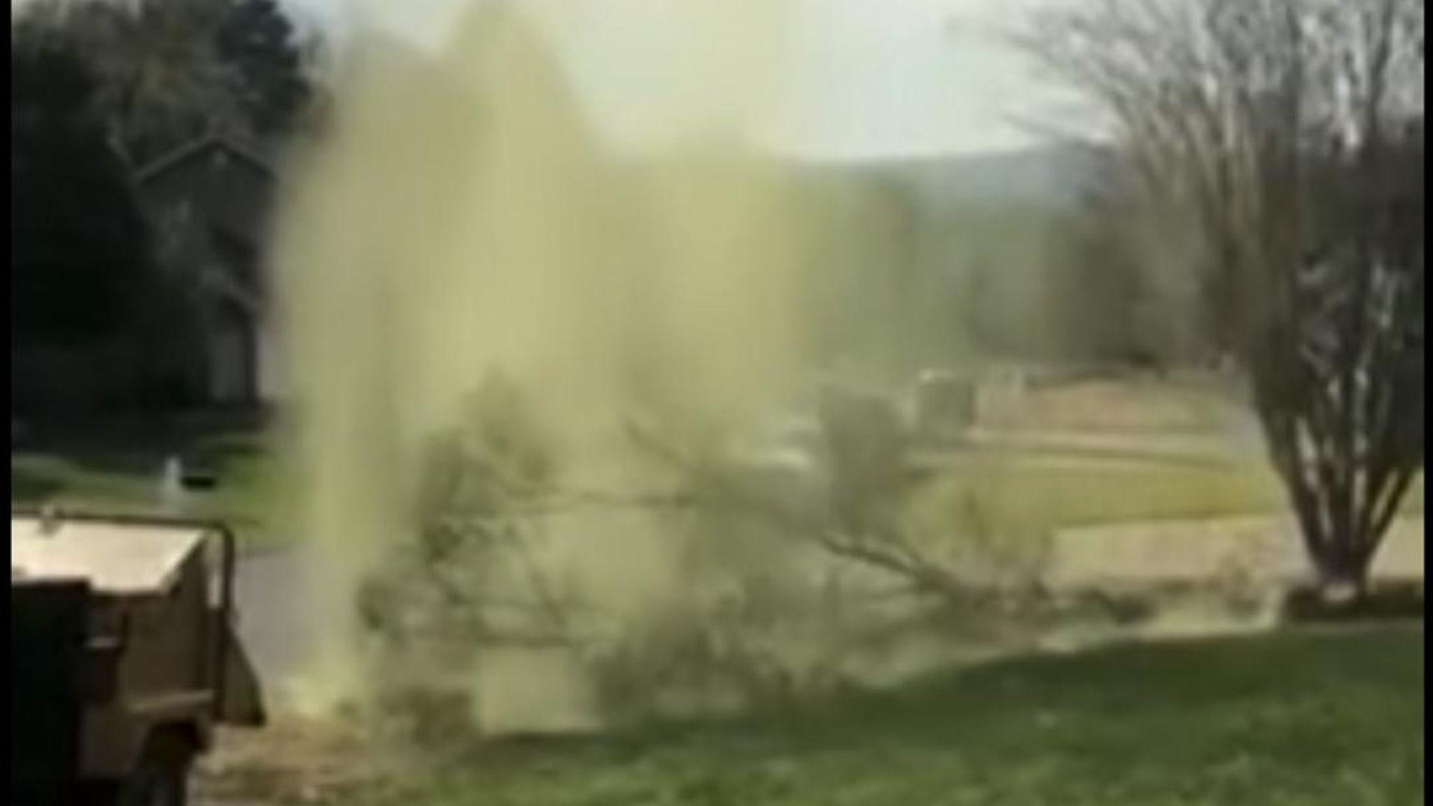 Tem alergias? Vídeo mostra nuvem de pólen a emanar de árvore caída