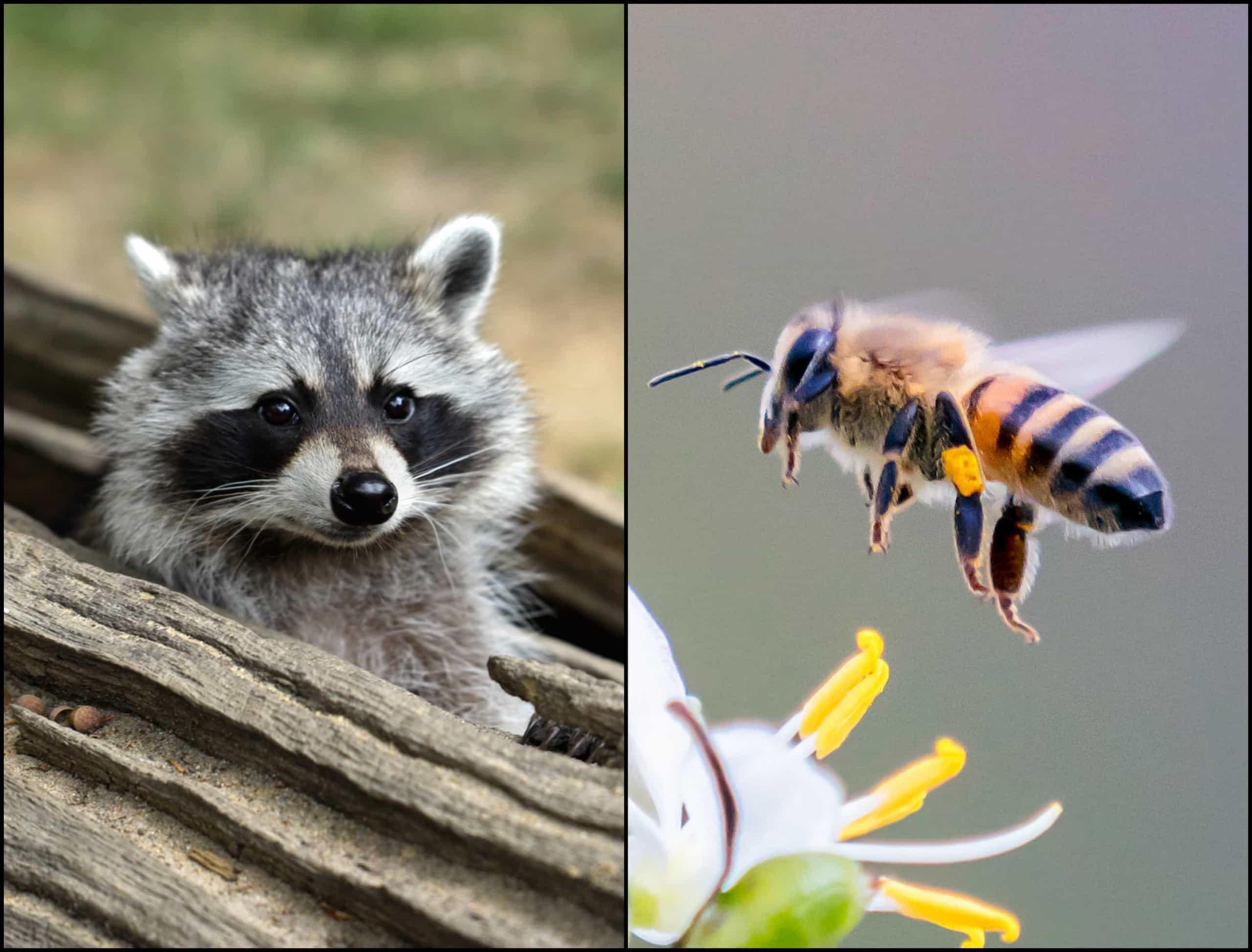 Sabia que estas criaturas podem estar a viver no seu corpo?