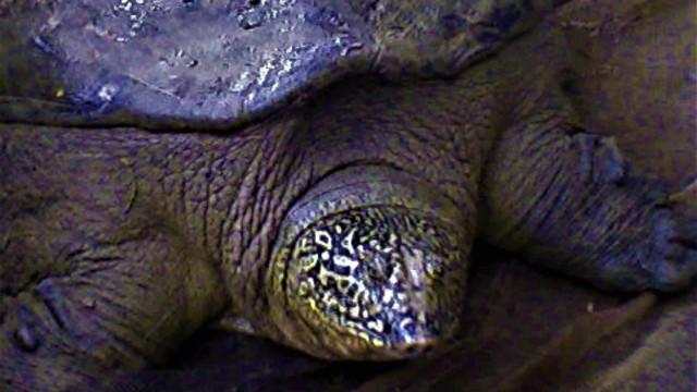 Perigo! Os incríveis animais que estão em vias de extinção