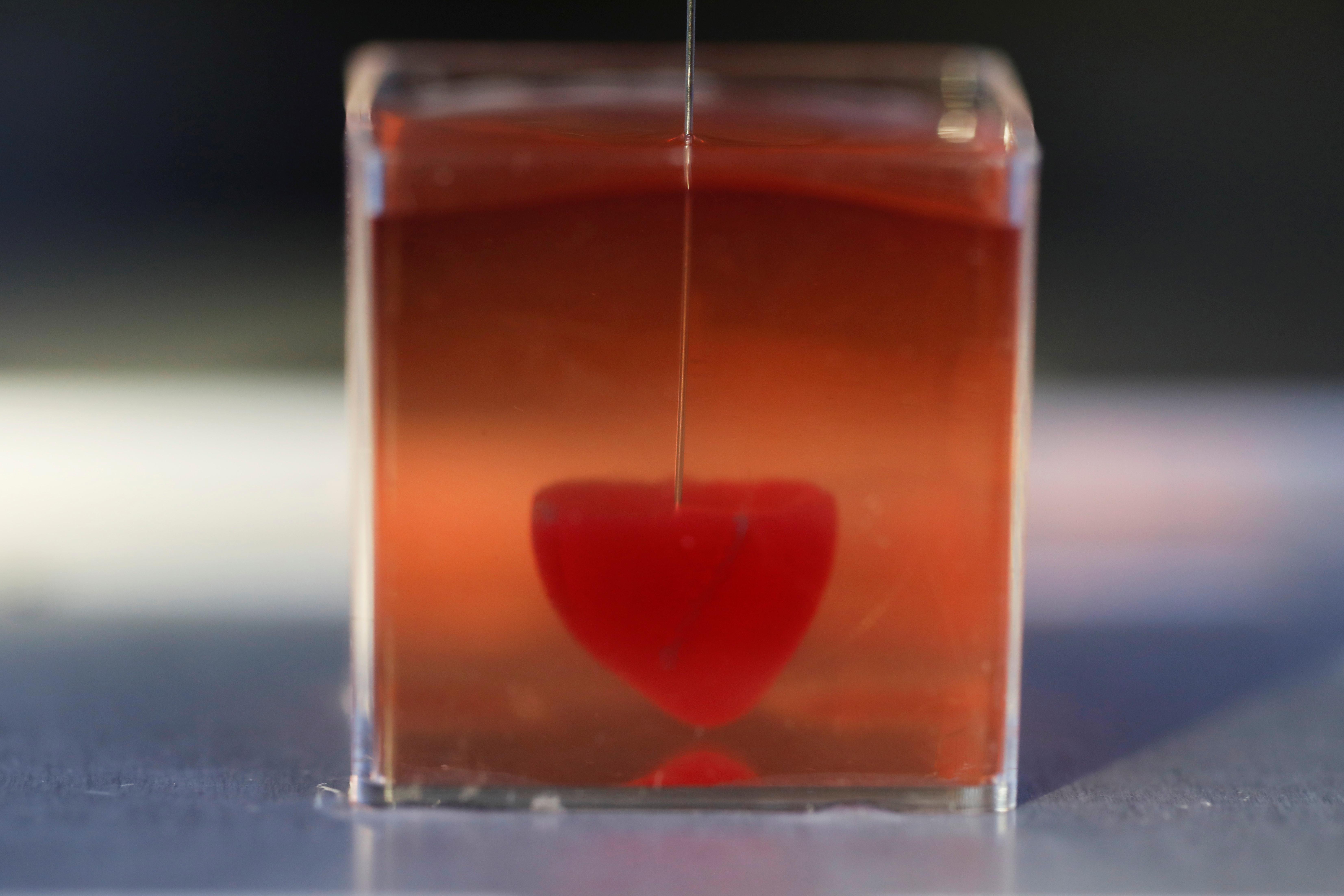 Impressora 3D produz coração a partir de tecido humano