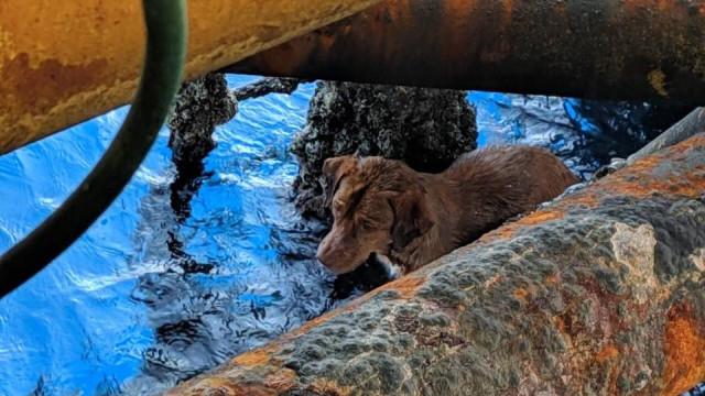 Cão encontrado a nadar a 220 quilómetros da costa da Tailândia