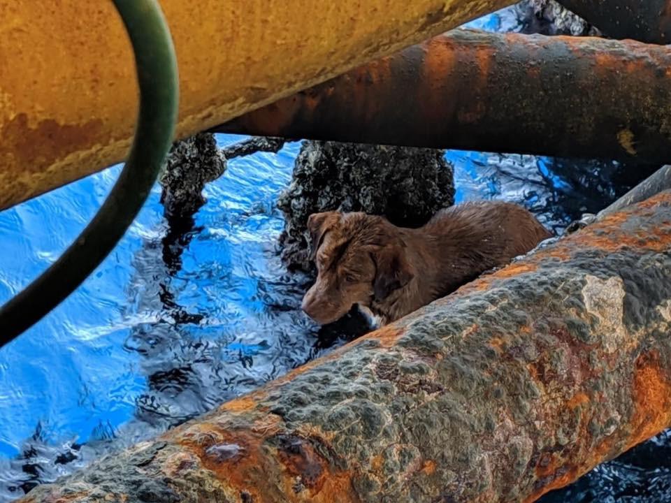 Trabalhadores de plataforma petrolífera salvam cão a 220 km da costa