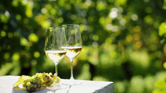 Vila Galé e AP Hotels estudam parceria para hotel e produção de vinho