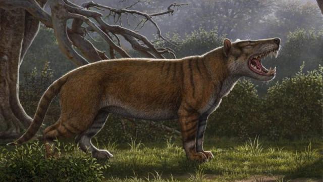 Fóssil de tigre pré-histórico estava guardado há anos em gaveta de museu