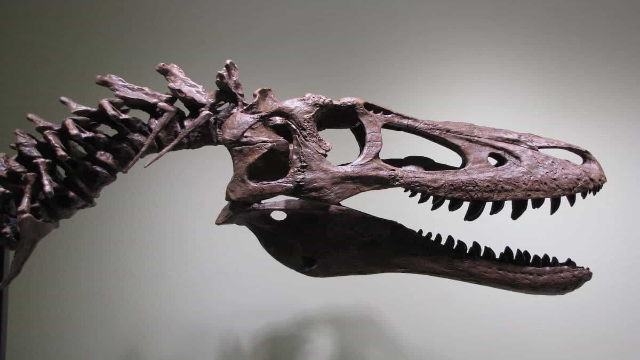 Há um esqueleto de um T. rex à venda no eBay por 2,6 milhões de euros