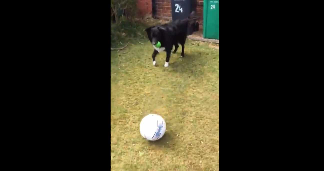 Este 'cão futebolista' está a fazer furor nas redes sociais por isto