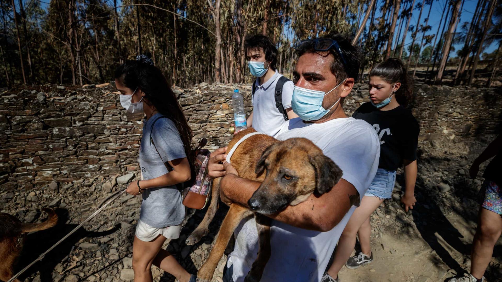 Ativistas exigiram justiça no caso dos animais mortos no incêndio de 2020
