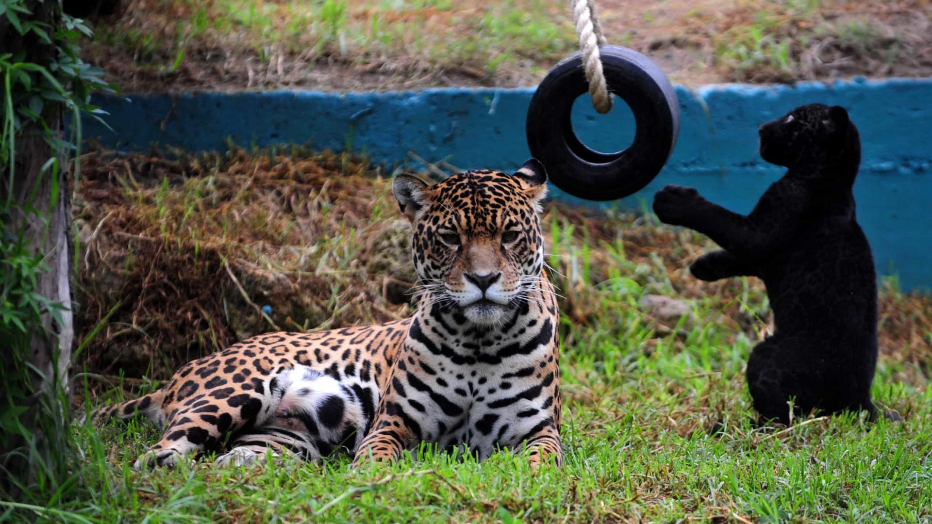 Com a pandemia, há um zoo que começou a plantar para alimentar os animais